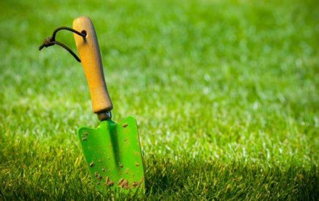 Désherber la pelouse