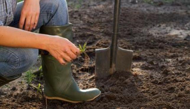 Déterminer la nature du sol d'un jardin
