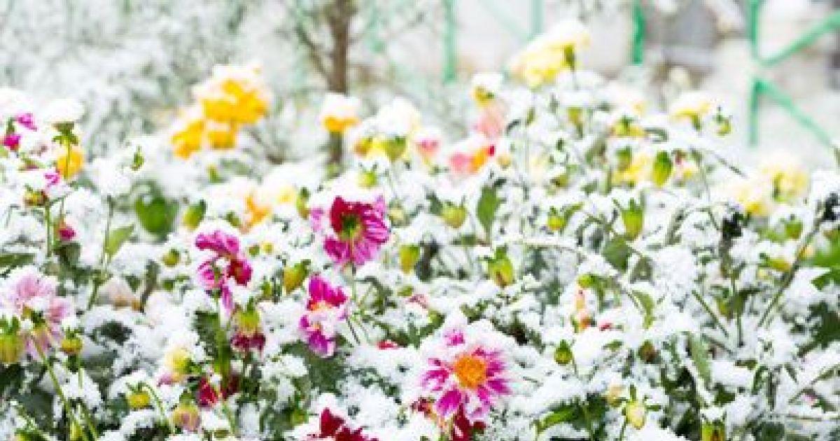 10 plantes qui résistent au froid en hiver
