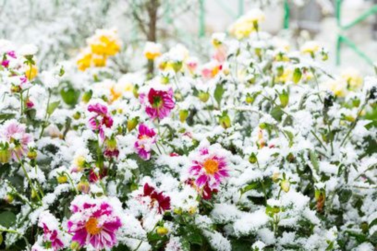 Plante Robuste Pour Terrasse 10 plantes qui résistent au froid en hiver