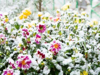 10 plantes qui résistent au froid