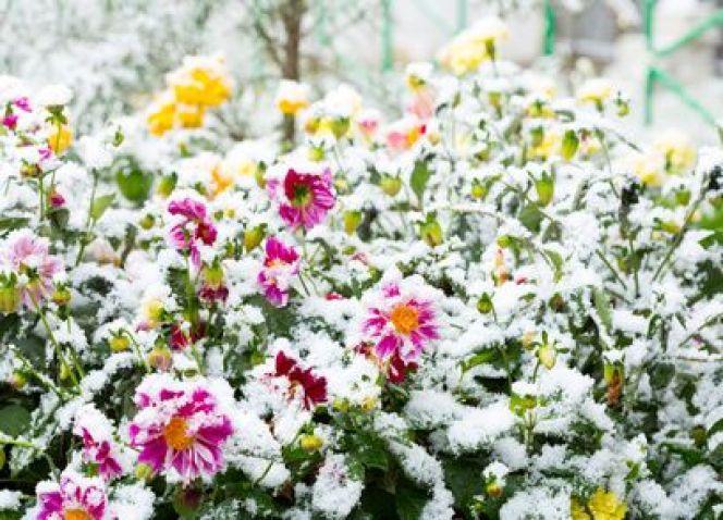 Dix plantes qui résistent au froid
