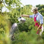 Du fumier pour améliorer votre jardin potager