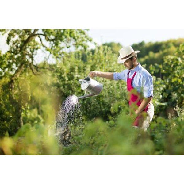 Du fumier pour am liorer votre jardin potager for Entretien d un jardin potager