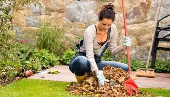 Entretien d'un jardin en automne