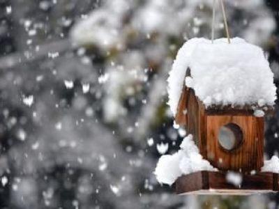 Entretien d'un jardin en hiver