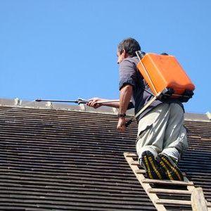 Entretien d'une toiture : faut-il l'hydrofuger?
