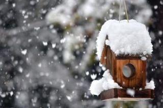 L'entretien du jardin en hiver