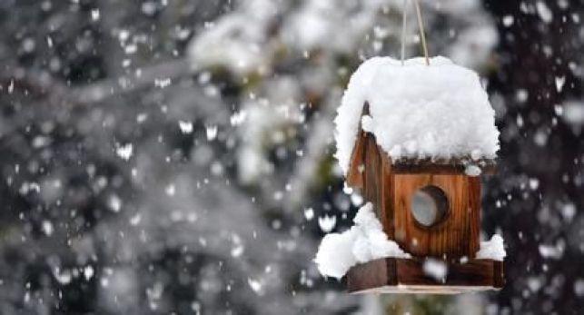 Entretien du jardin en hiver