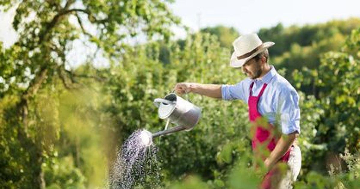 Faire appel un jardinier pour entretenir son jardin for Entretenir son jardin en avril