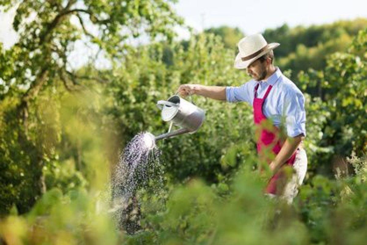 Faire Appel A Un Jardinier Pour Entretenir Son Jardin