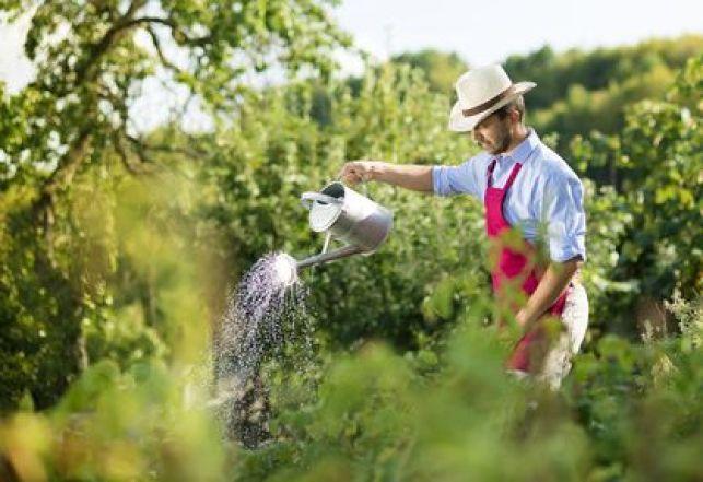 Faire appel à un jardinier pour entretenir son jardin