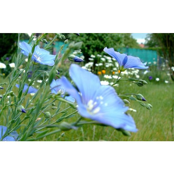 Fleurir un jardin guide de jardinage for Fleurir son jardin