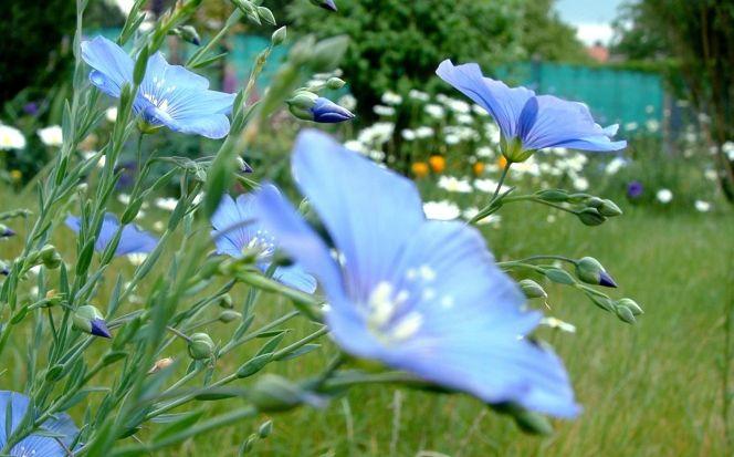 Fleurir un jardin