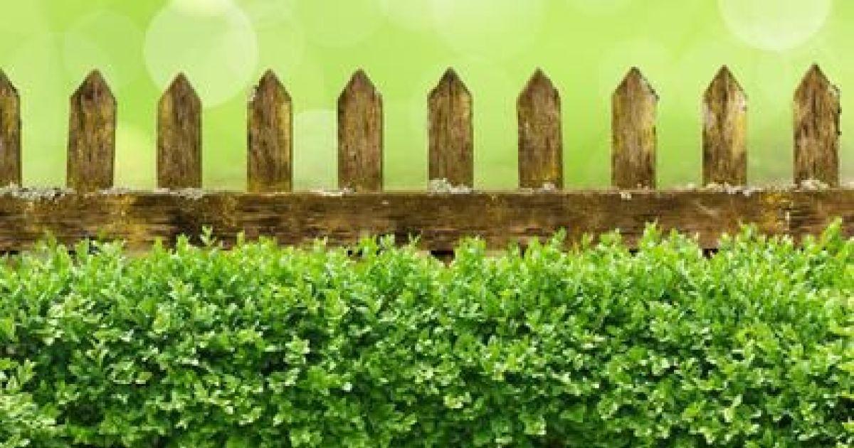 Haies de jardin cl turez votre jardin avec des buissons for Fausse haie de jardin