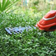 Hauteur maximale des arbres et haies de jardin