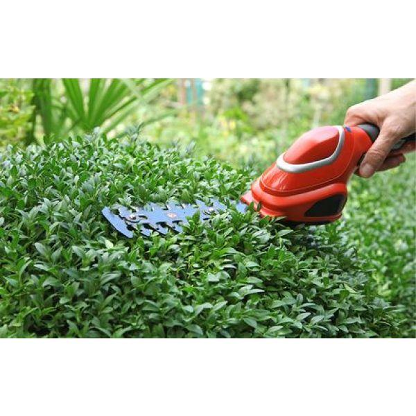 Hauteur maximale autorisée pour les arbres et haies de jardin
