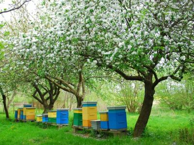 Installer des ruches à abeilles dans son jardin
