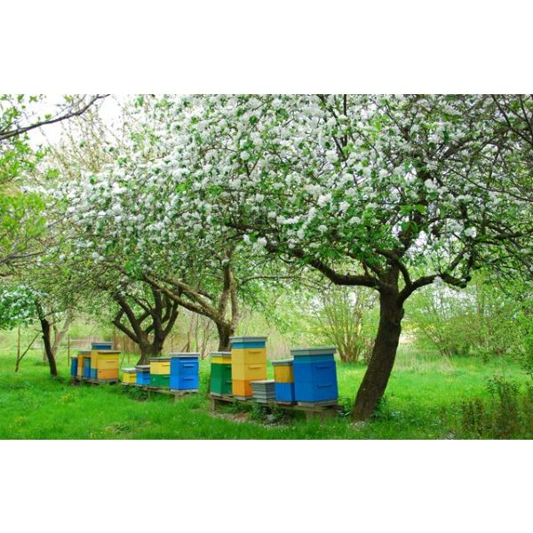 installer des ruches abeilles dans son jardin. Black Bedroom Furniture Sets. Home Design Ideas