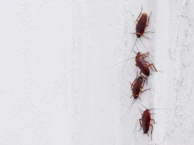 Invasion d'insectes coléoptères dans une maison : que faire ?