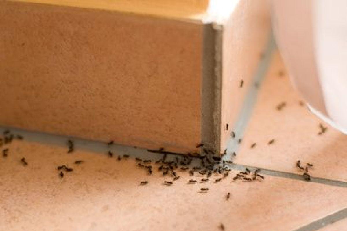 Comment Éloigner Les Mouches À L Extérieur invasion de fourmis : que faire ?
