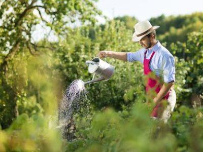 Jardinage et petits travaux : comment payer en chèques CESU ?
