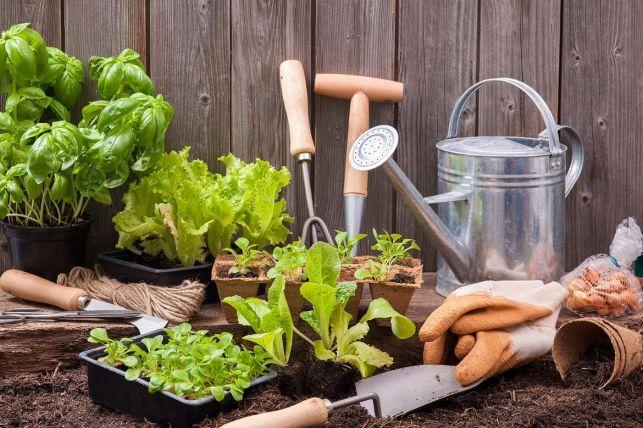 Jardiner en ville : les solutions
