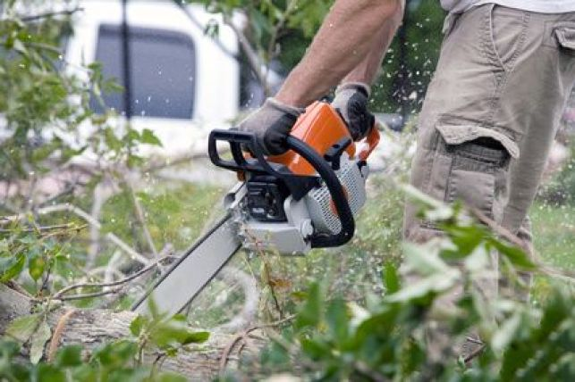 L'abattage d'un arbre : comment procéder ?