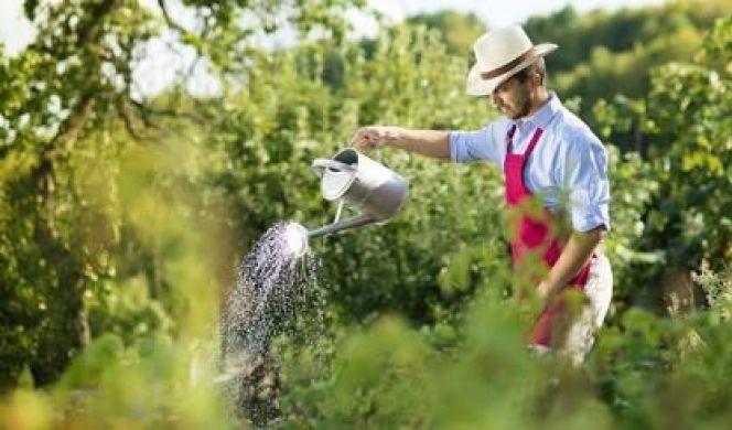 L'éco-jardinage