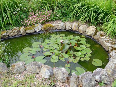 L'entretien d'un bassin d'ornement dans le jardin