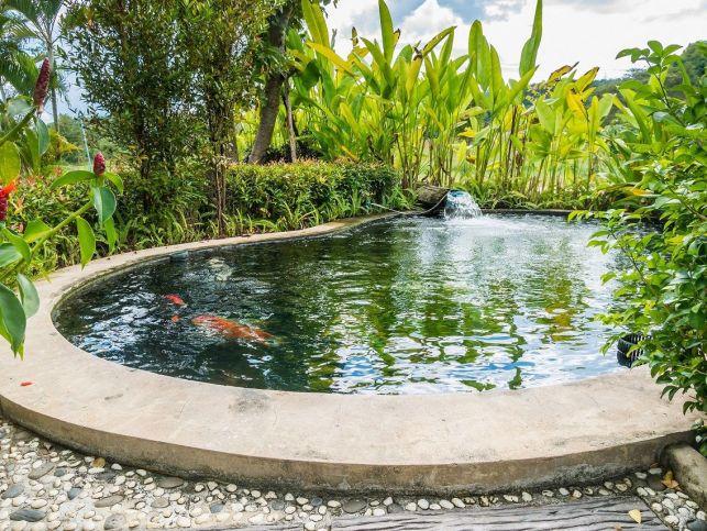 L'entretien d'un bassin de jardin en automne et en hiver