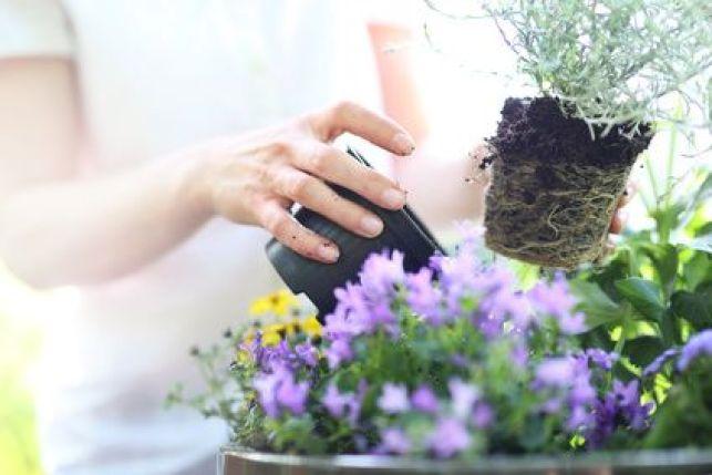 L'entretien du jardin au printemps