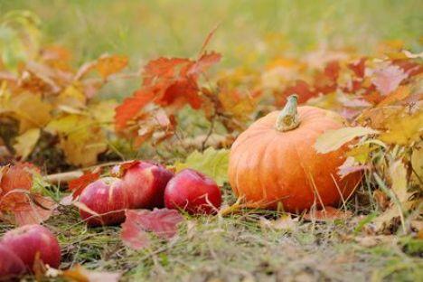 L'entretien du jardin en automne