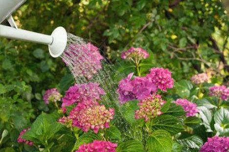 L'entretien du jardin en été