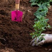 L'humus en jardinage