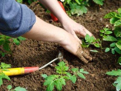 L'utilisation de cendre de bois en jardinage