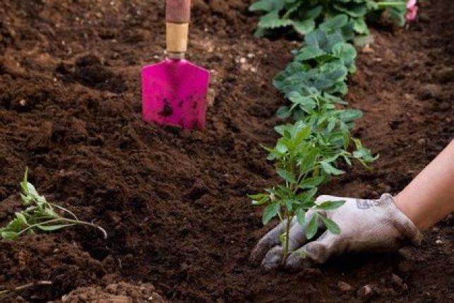 L'utilisation du compost en jardinage