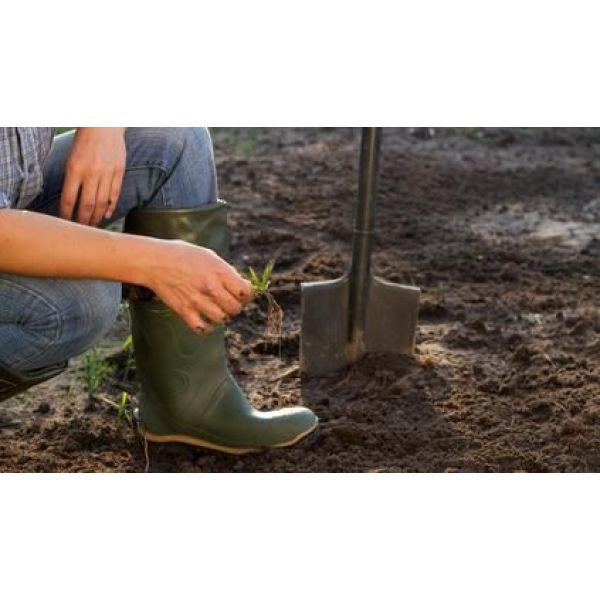 L utilisation du purin en jardinage - Utilisation du purin d ortie ...