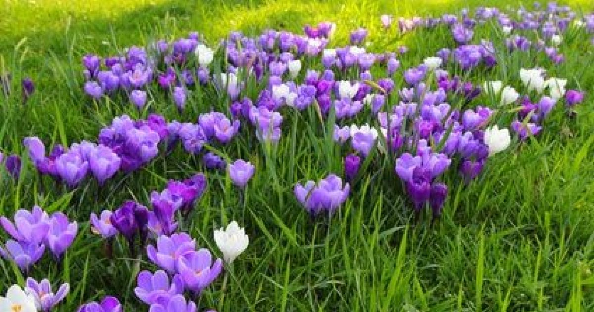 Une jach re fleurie dans un jardin for Organiser un jardin fleuri