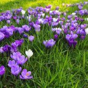 La jachère fleurie