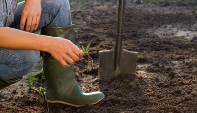 Labourer son jardin : techniques et procédé