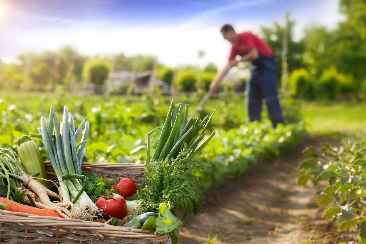 Quel Fruit Planter Au Printemps le calendrier de jardinage pour savoir quand planter vos