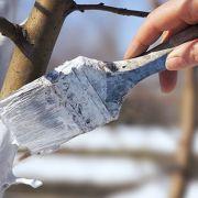 Le chaulage des arbres : pourquoi et comment faire?