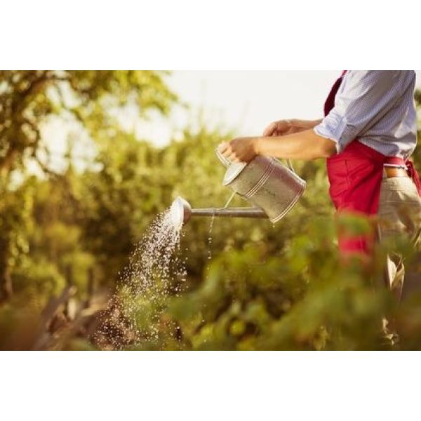 Le contrat d 39 entretien pour votre jardin comment a marche for Contrat entretien jardin