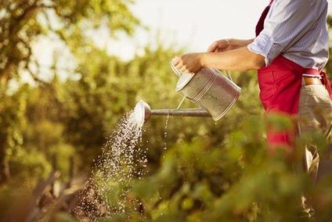 Le contrat d'entretien pour votre jardin