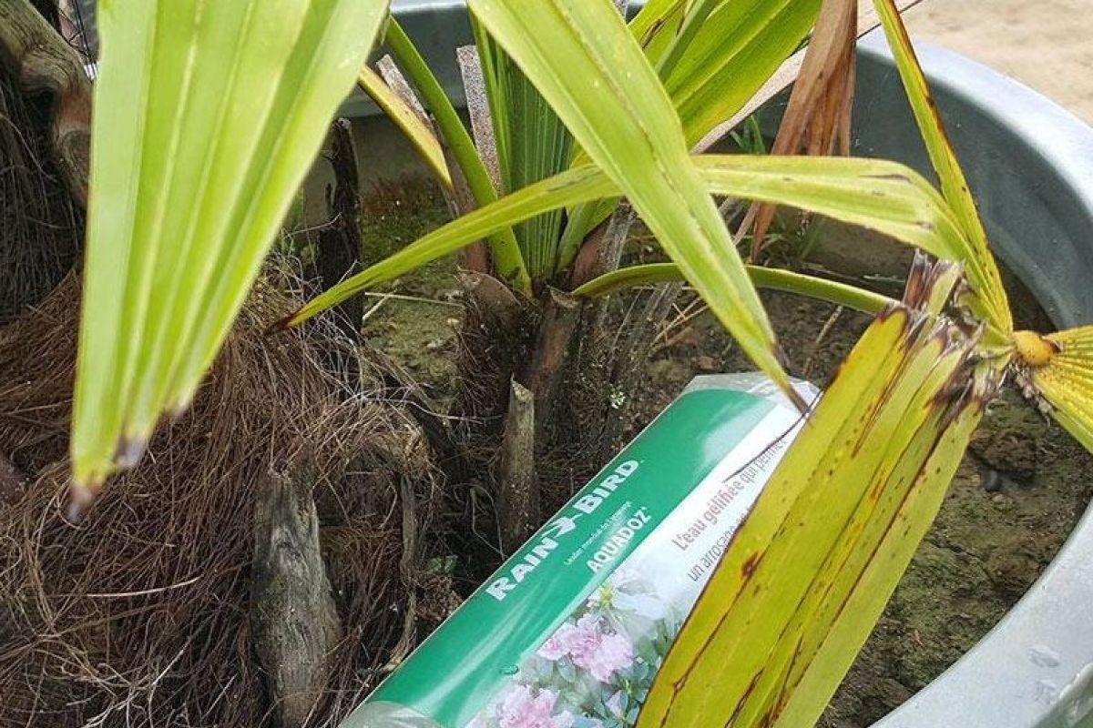 Comment Arroser Mes Plantes Pendant Les Vacances le gel d'arrosage, de l'eau gélifiée pour vos plantes