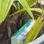 Le gel d'arrosage, de l'eau gélifiée pour vos plantes pendant votre absence