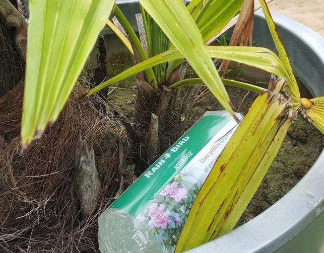 Le gel d'arrosage, de l'eau gélifié pour vos plantes pendant votre absence
