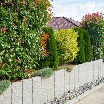 Le Photinia : l'arbuste idéal pour vos haies de jardin