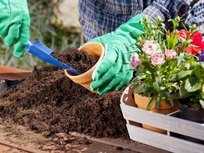 Le repiquage en jardinage